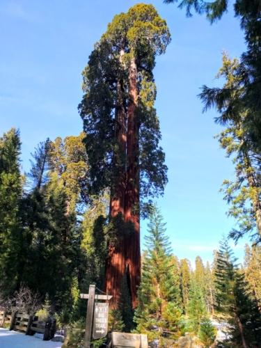 13. Big Trees Trail