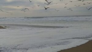Gulls & Waves at Guadalupe